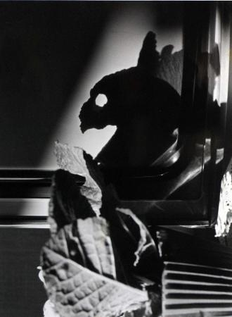 José Guirao, sans titre (ombre d'un feuillage en f