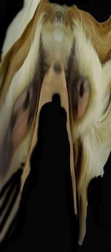 masque d'où sourd une ombre,photo numérique modifiée,Bruno Montpied,fév 09.jpg