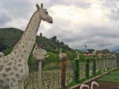 Horace Diaz, girafe et autres animauxs, ph.Boudra, 2009.jpg