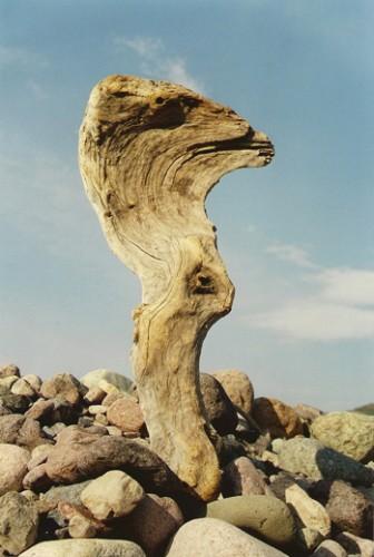 Le visionnaire et l'introverti, rivière du Fango, Corse,ph.Bruno Montpied,1993.jpg