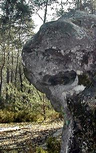 art visionnaire,poésie naturelle,rochers sculptés,roche de la chouette,forêt de fontainebleau,cartes postales insolites,abbé fouré,rené alleau