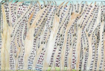 Thierry Chanaud, dessin Des cerises, des arbres, musée Les Amoureux d'Angélique.jpg