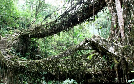 Pont-de-racines-3.jpg