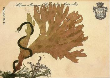 Alguier de M.Doublet,coll. Musée maritime de Tatihou, ph Jacques Blondel.jpg
