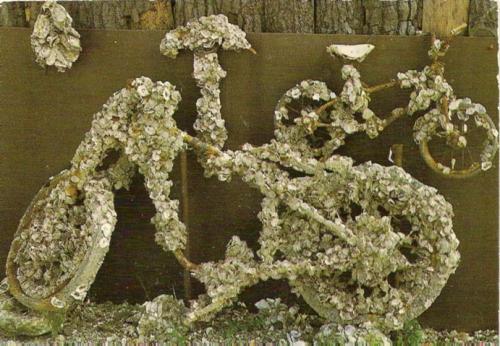 Vélo-couvert-d'huîtres,-cp.jpg