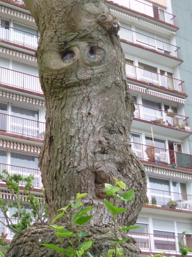 pareidolies,photo visionnaire,hallucinations visuelles