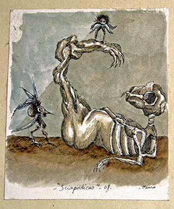 Gilles-Manero,-Sciapodicus,.jpg