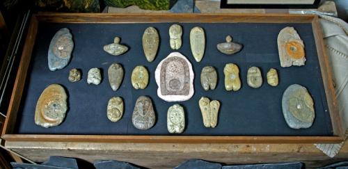 Echantillons de vestiges patatoniens, chez SG(2).jpg
