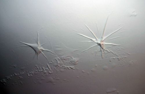 Araignees-au-plafond,-hotel.jpg
