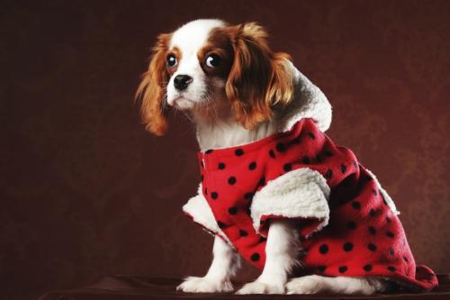 vetements-pour-chien.jpg