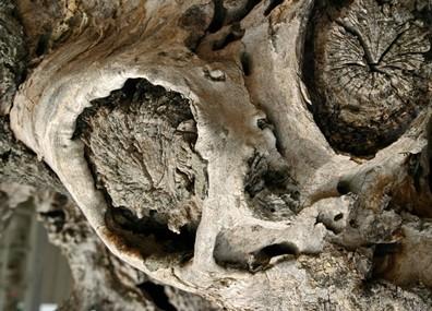 MetL-Cadavre-d'ET.jpg
