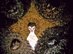 musée de la chasse et de la nature,exposition cibles,annie le brun,claude d'anthenaise,gilbert titeux,tir sur cibles peintes,art populaire insolite,cibles foraines