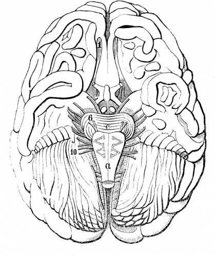 old-engraving-of-the-human-brain-in-section.-The-book-Natur-und-Offenbarung-1861.jpg