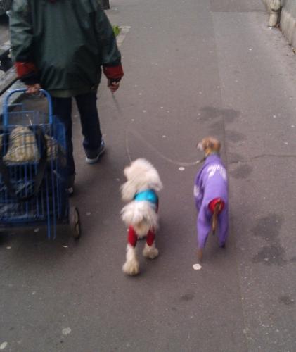 Les chiens déguisés, oct 13, ave Vellefaux (recadré).jpg
