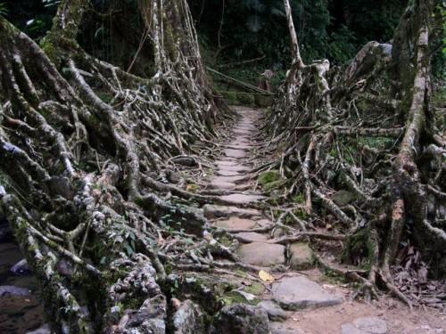 Pont de racines 2.jpg